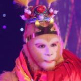 美猴王模仿秀